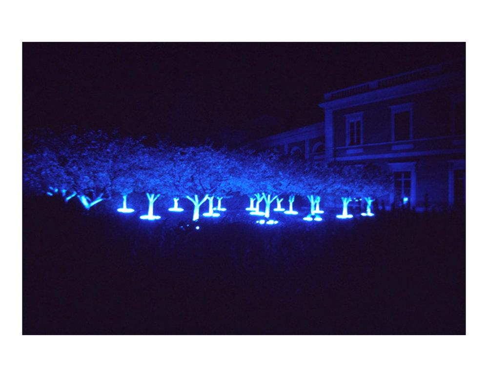 black_light_night_white_garden_4.jpg