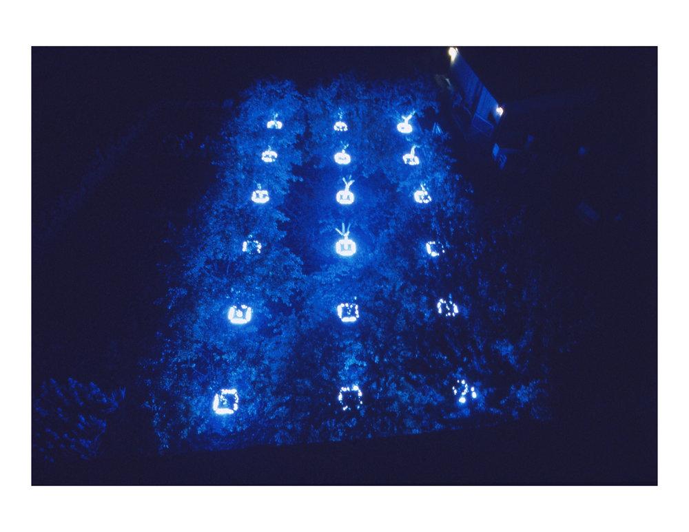 black_light_night_white_garden_2.jpg