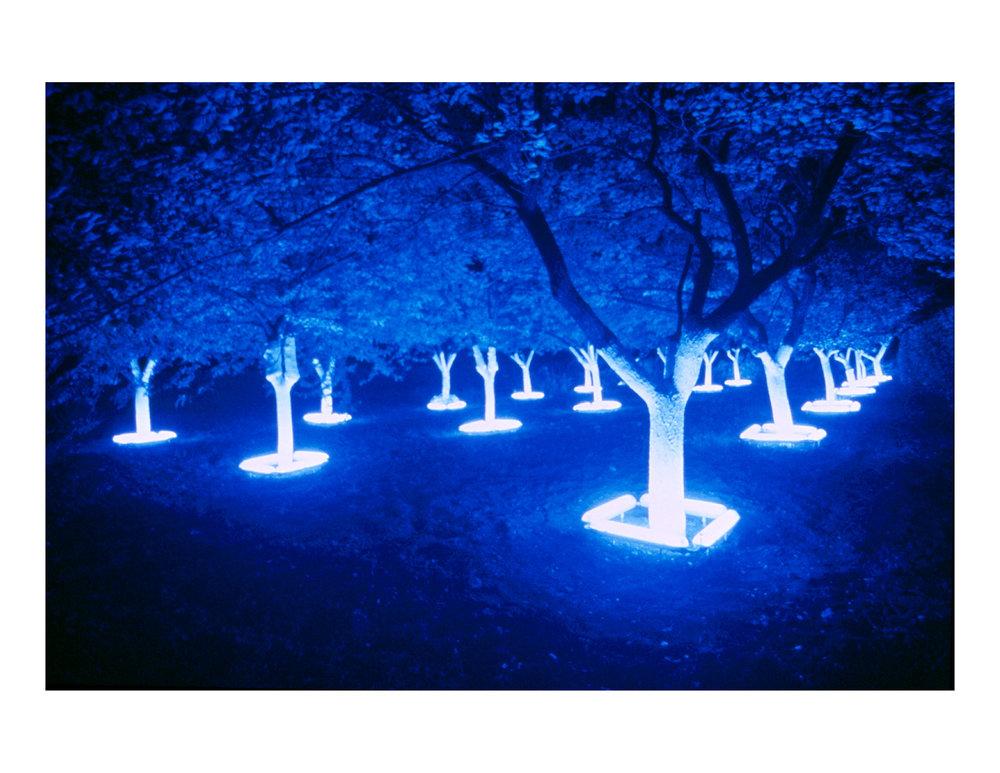 black_light_night_white_garden_1rev.jpg