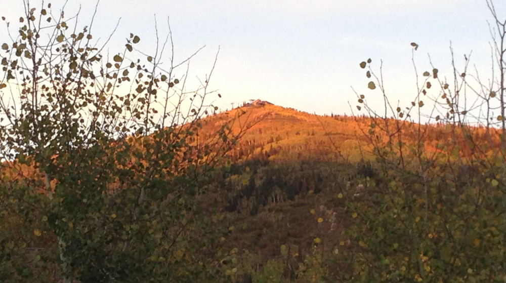 The last of the aspen gold up on Mount Werner in the alpenglow of autumn dusk.