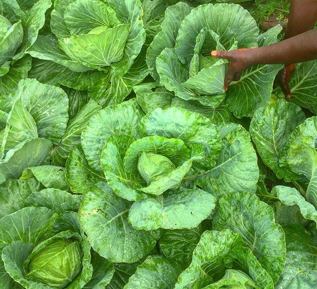Lush...Evergreen. #everydayafrica #agriculture