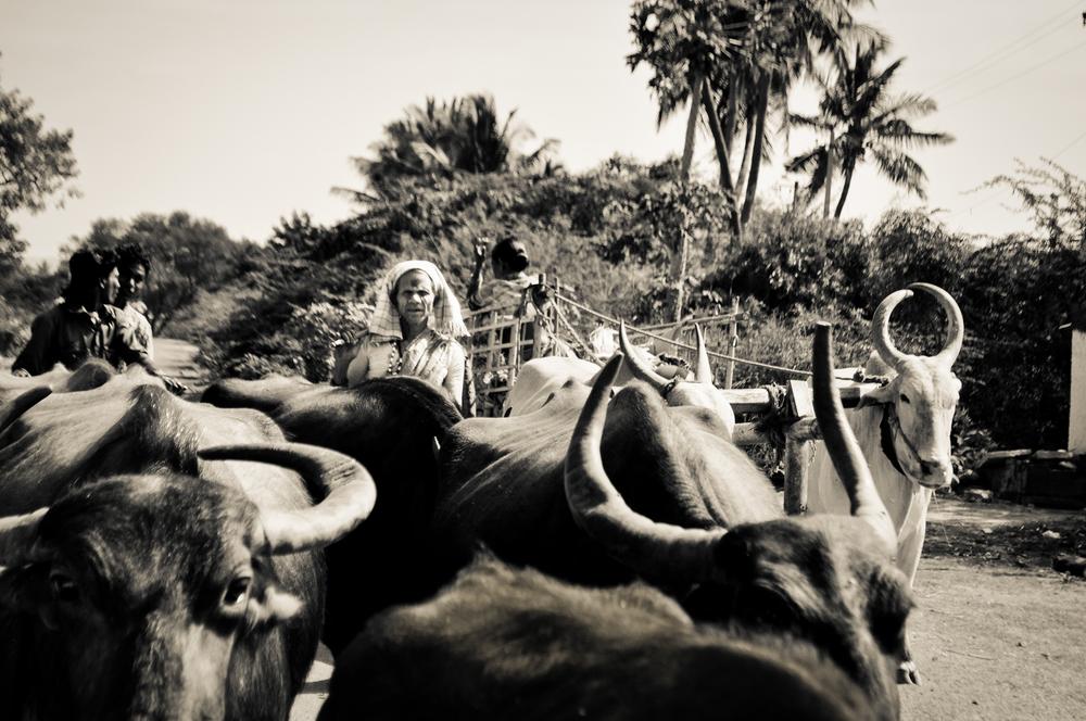 Ananda Kesler-0141-2.jpg