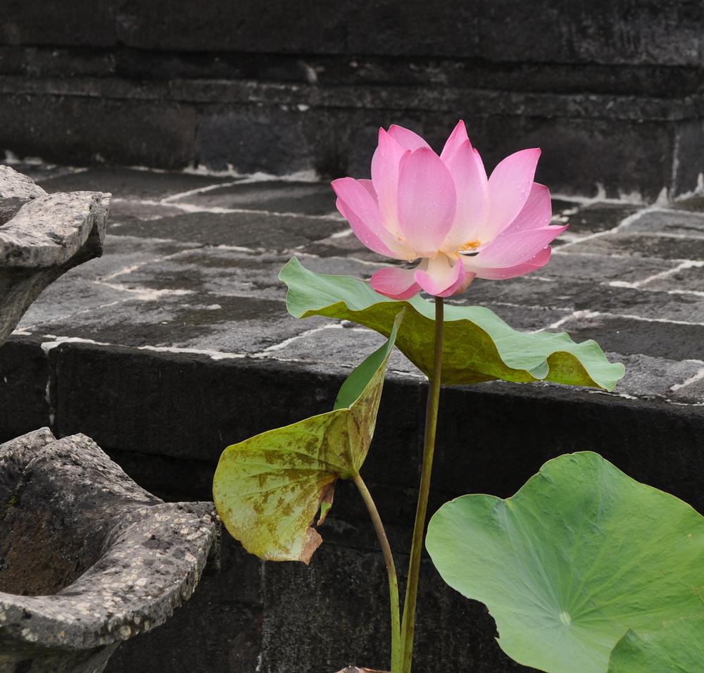 Southeast Asia 2010 762.jpg