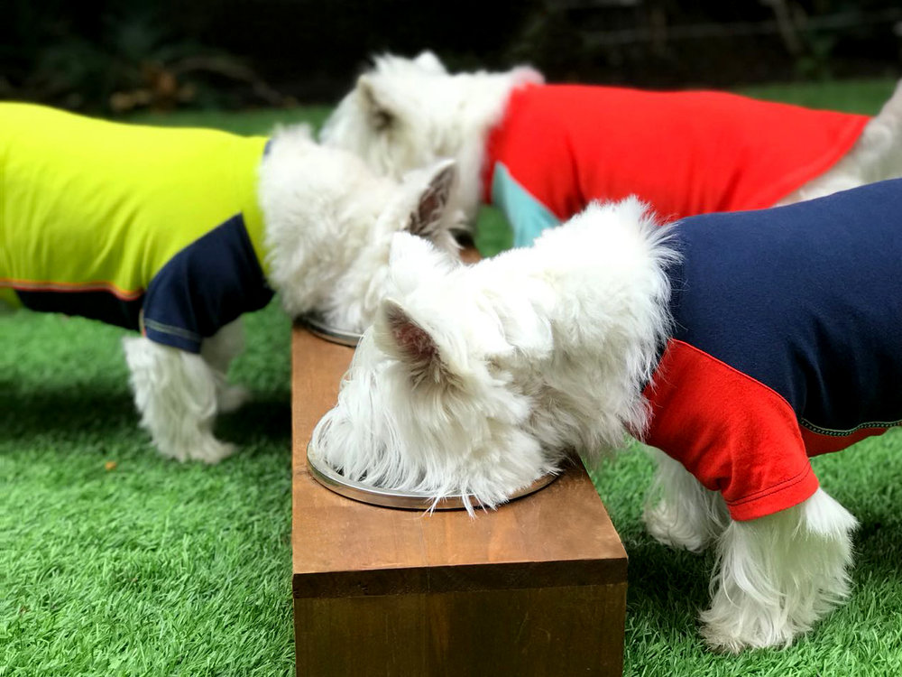 3 Westies Eating_PS_150.jpg