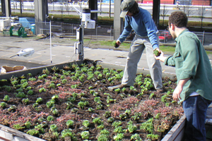 Green Roof Evaluation Project