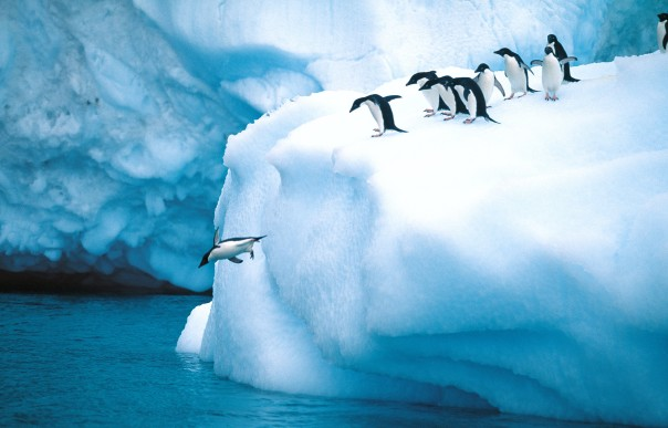 Adelie-penguins-604x387.jpg