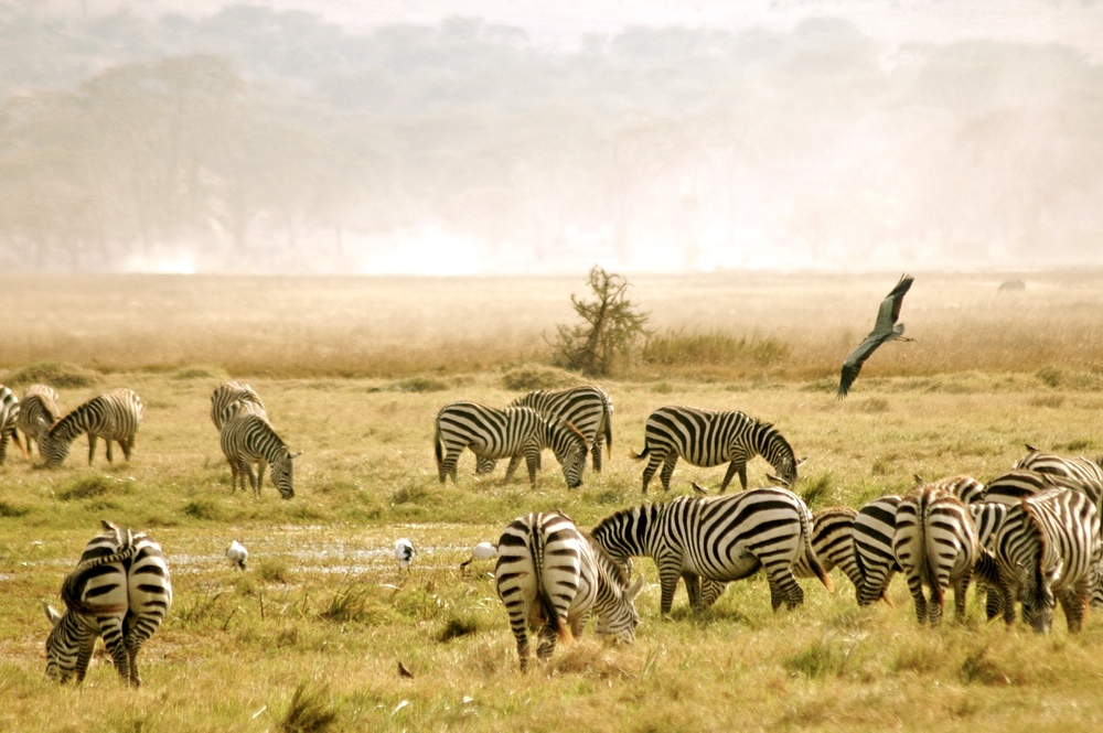 TANZANIA SERENGETI | 8 DAYS Year Round
