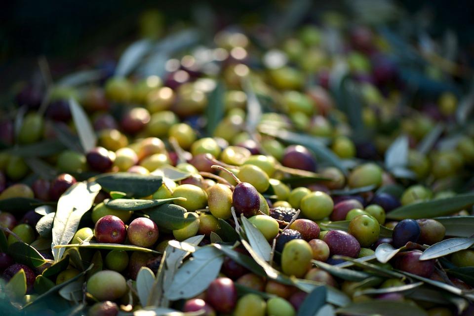 olives-253264_960_720.jpg