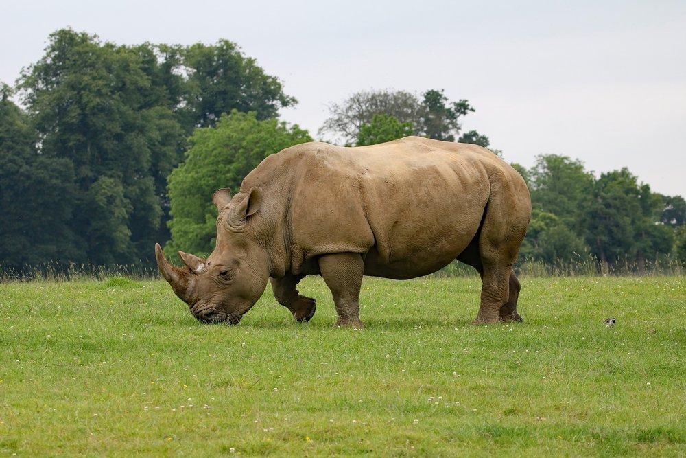 rhino-1895111_1920.jpg