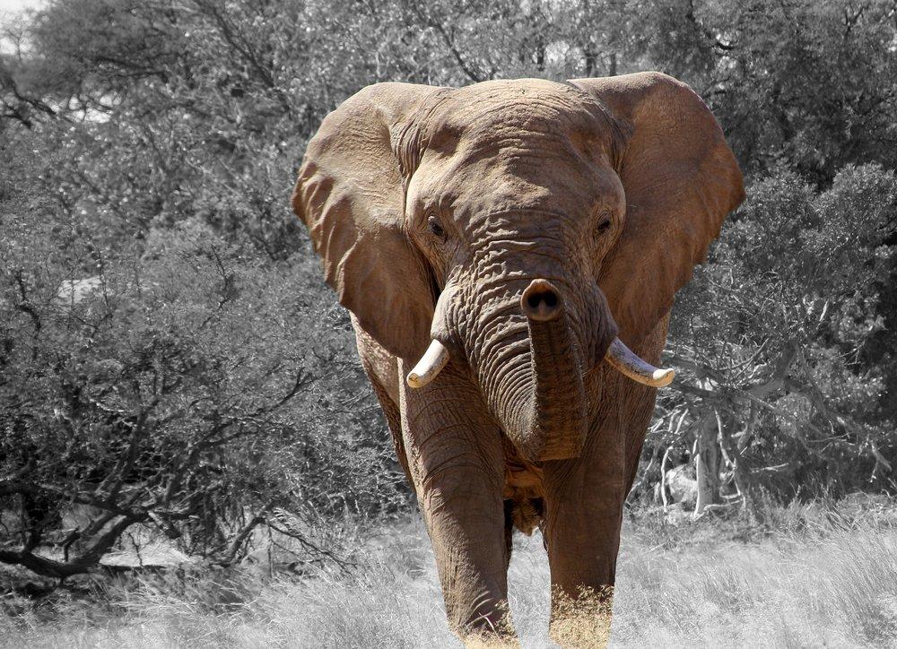 elephant-84186_1920.jpg