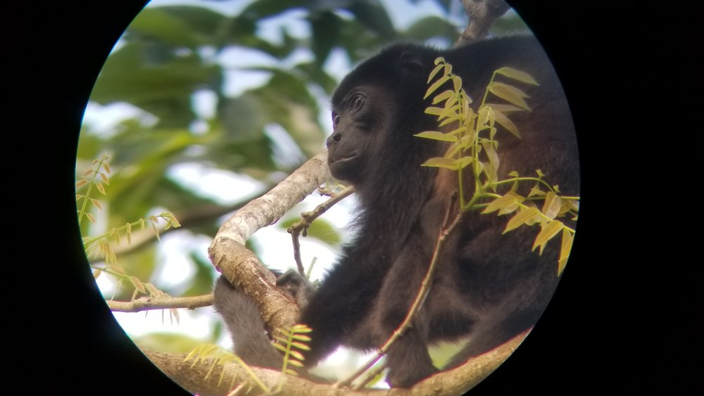 11_Wildlife.jpg