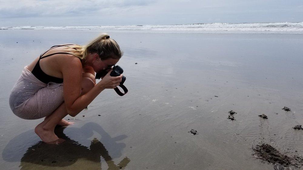 13_Turtles.jpg