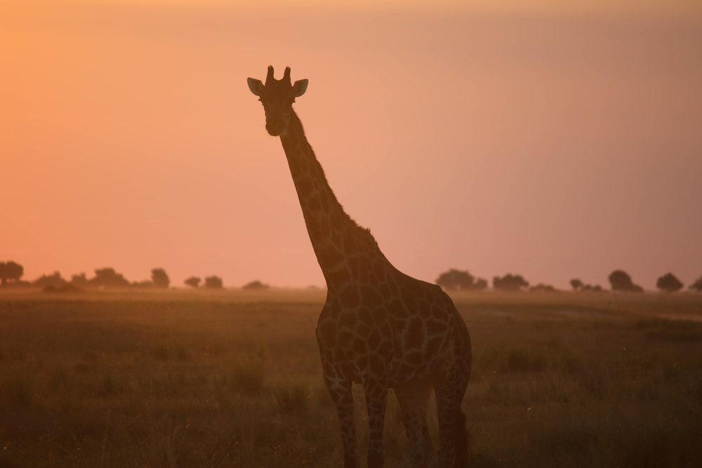 Africa  |  Botswana  /  Tanzania  /  Kilimanjaro  /  Ethiopia  /  MOROCCO  /  EGYPT  /  Mozambique  /  Namibia