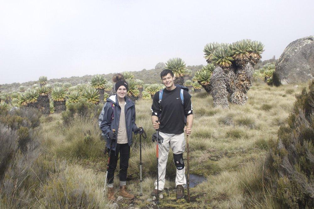 Climbing_Kilimanjaro_Moorlands.jpg