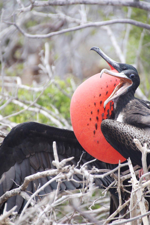Galapagos_Land_Tours_Wildlife