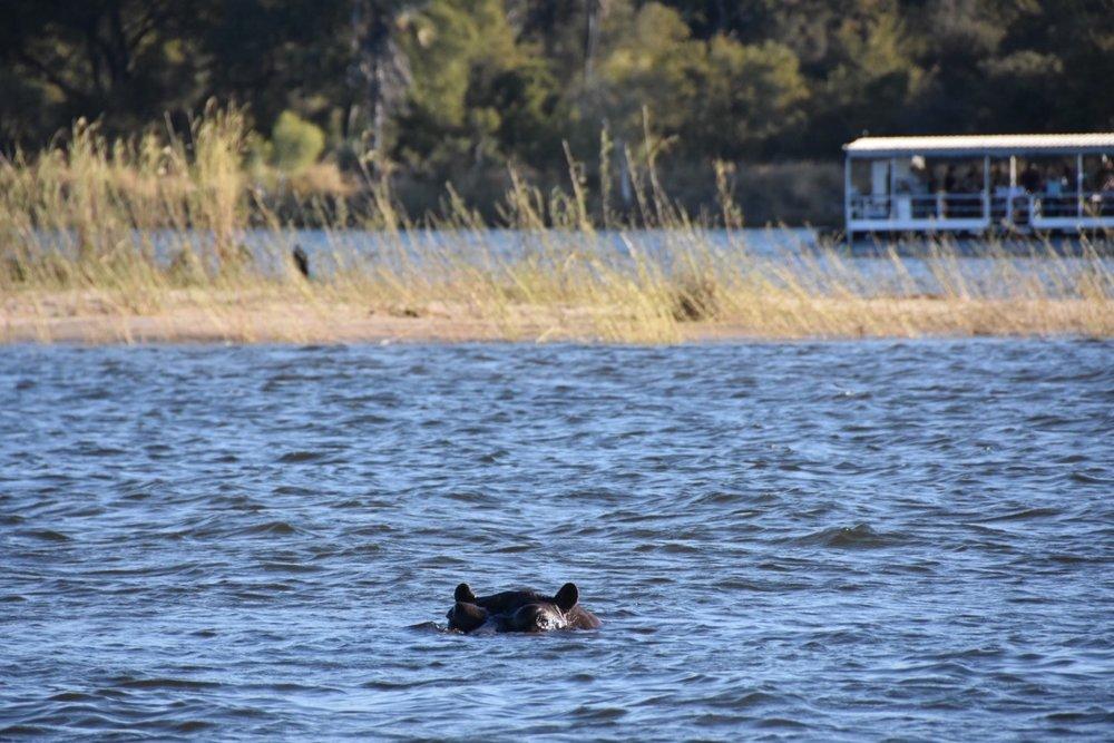 zambezi river.JPG