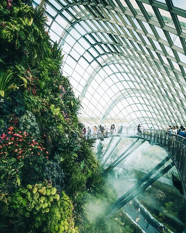 Not only is Singapore an incredibly enchanting city, but it is also a wonderful gateway to visiting Sumatra's mystical forests that are home to rare orangutans, tigers and elephants! Share your favorite Singapore or Sumatra experience in the comments below and tag a friend you would want to take with you to go see 🐒 🐘 🐅 !  @andreknot 📌 Cloud Forest, Singapore . . . . . #bpmag @wilderness_culture #tlpicks #awesomeearth #aroundtheworldpix #viaparadise @paradise #beautifuldestinations #wanderout #whatchthisinstagood #wonderful_places #tourtheplanet #earthofficial @fantastic.colours #travelawesome #alphacollective #discoverglobe @earthpix #fantastic_earth #places_wow #wonderful_places @livingonearth #earthfocus @wonderful_places #awesome_globepix #bestvacations @awesome.photographers #awesome_photographers #awesome_earthpix #ourplanetdaily #travelfervor @discoverearth @nakedplanet #passionpassport #singapore #cloudforest #mountaingorilla