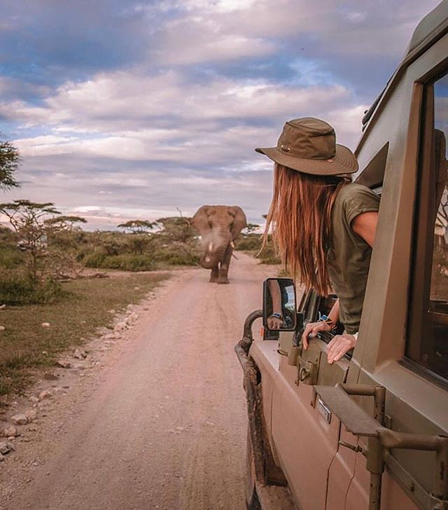 Kicking off the weekend with a safari drive through the Serengeti! We've been told that elephants never forget, so who wants to go with us on an unforgettable trip to Africa? Share your dream safari experience with us below and tag a friend you would take with you! 🐘 🐘 🐘  @crystalhefner 📌Serengeti . . . . .#bpmag @wilderness_culture #tlpicks #awesomeearth #aroundtheworldpix #viaparadise @paradise #beautifuldestinations #wanderout #whatchthisinstagood #wonderful_places #tourtheplanet #earthofficial @fantastic.colours #travelawesome #alphacollective #discoverglobe @earthpix #fantastic_earth #places_wow #wonderful_places @livingonearth #earthfocus @wonderful_places #awesome_globepix #bestvacations @awesome.photographers #awesome_photographers #awesome_earthpix #ourplanetdaily #travelfervor @discoverearth @nakedplanet #passionpassport #safari #serengeti #elephant