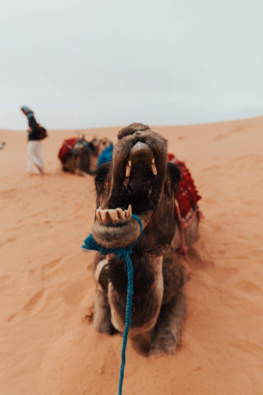 Day 4 sahara ride-89.jpg