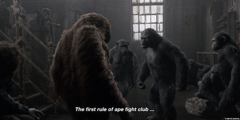 Photo from: planetoftheapes.wikia.com