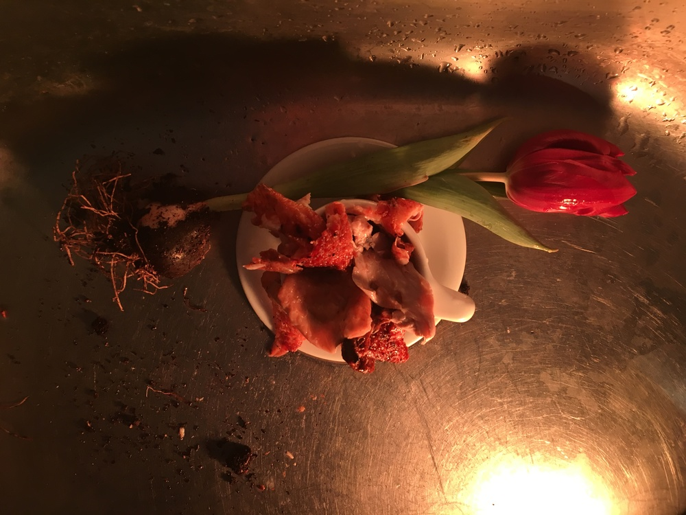 Chicken Skin and Tulips
