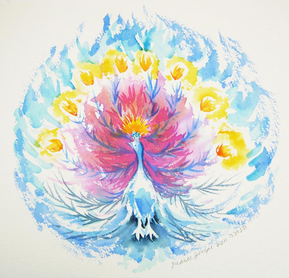 Hanukah Peacock