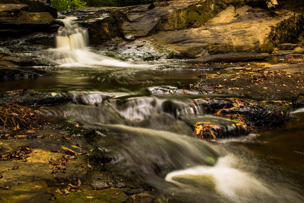 Raven rock stream - Lillington, NC