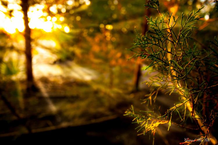 Sun rays - Wilmington, NC