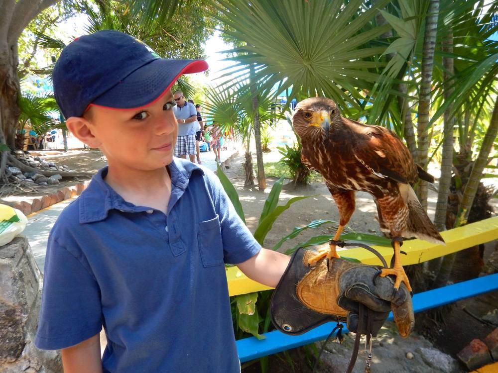 Planet - Boy with Hawk