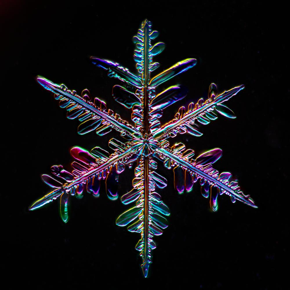 Snowflake 2015.01.25.003