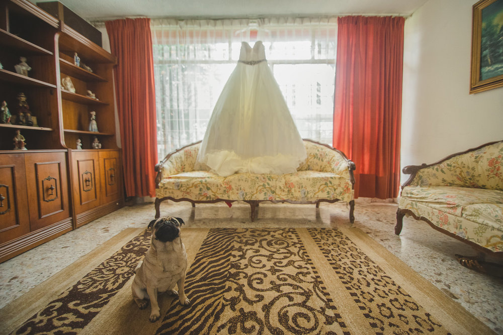 fotografo de bodas mexico - wedding dress dog pug wedding photographer
