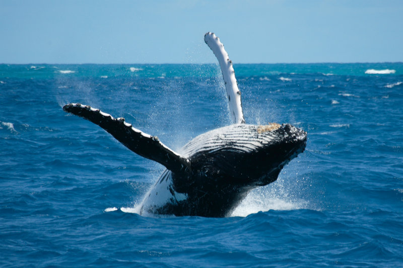 Swim With The Whales and Whale Watching