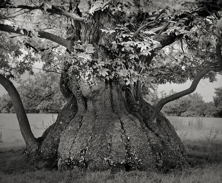 ancient-trees-beth-moon-4.jpg