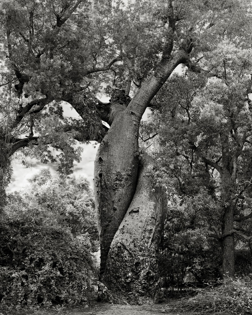 ancient-trees-beth-moon-20.jpg