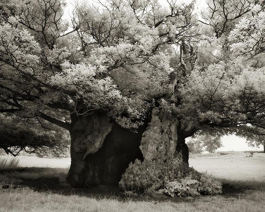ancient-trees-beth-moon-19.jpg