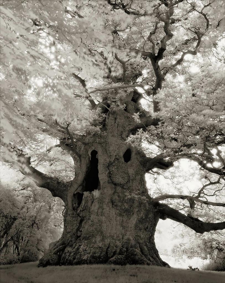 ancient-trees-beth-moon-16.jpg
