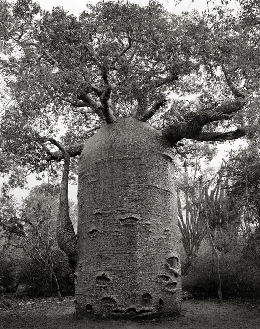 ancient-trees-beth-moon-11.jpg