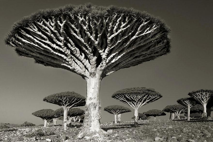 ancient-trees-beth-moon-9.jpg