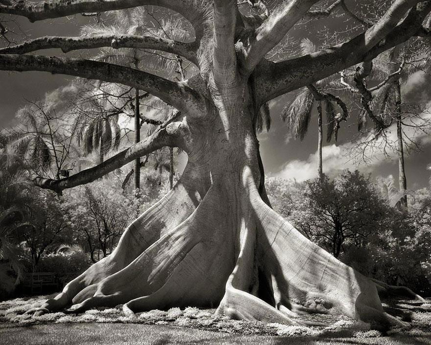 ancient-trees-beth-moon-10.jpg