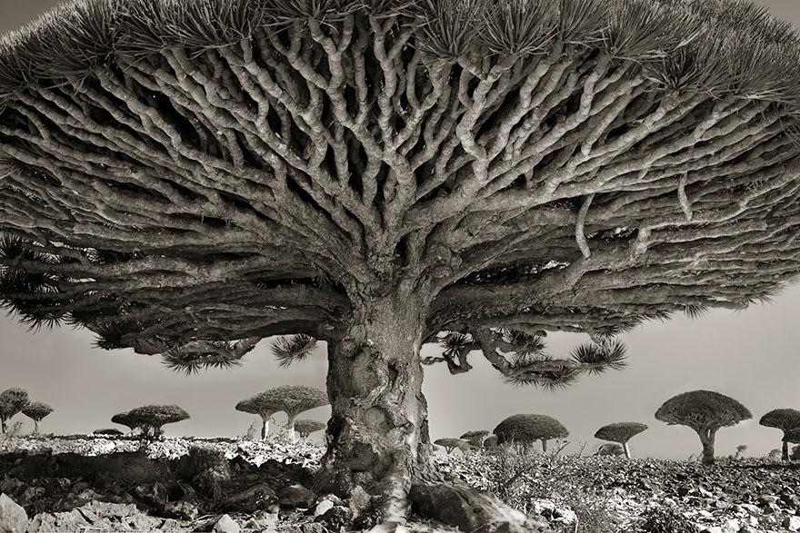 ancient-trees-beth-moon-8.jpg