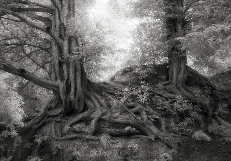 ancient-trees-beth-moon-7.jpg