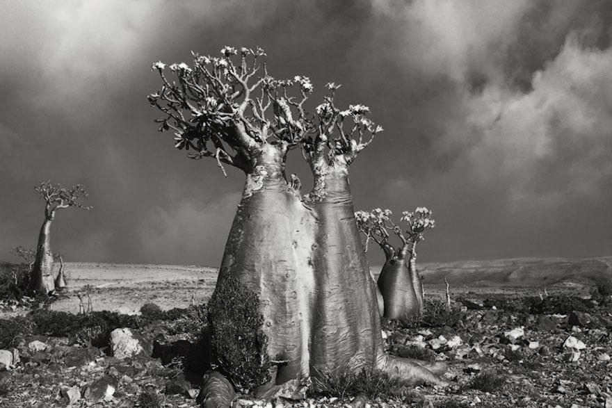 ancient-trees-beth-moon-5.jpg