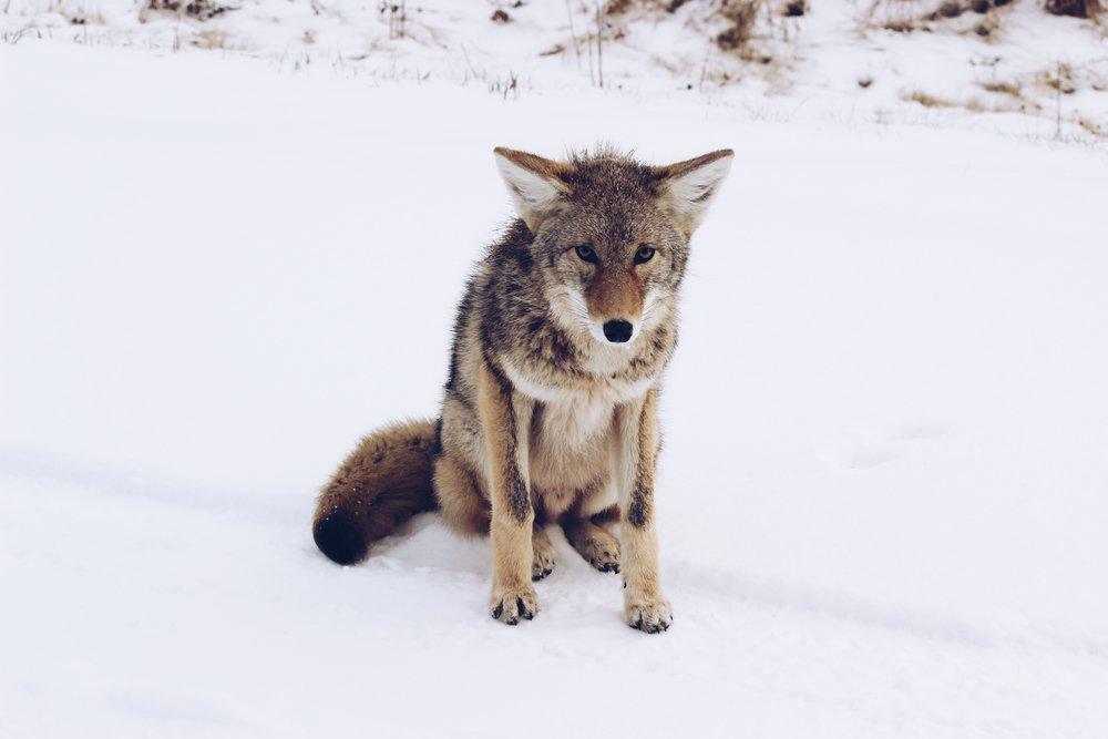 fullwolfmoon.jpg