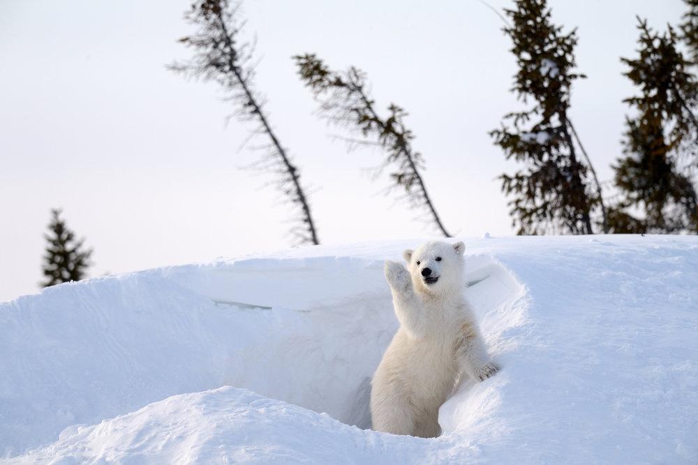 cute-polar-bear.jpg