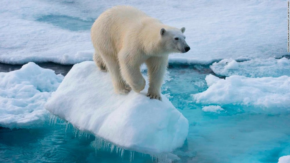180202121239-01-polar-bear-file-restricted-super-tease.jpg