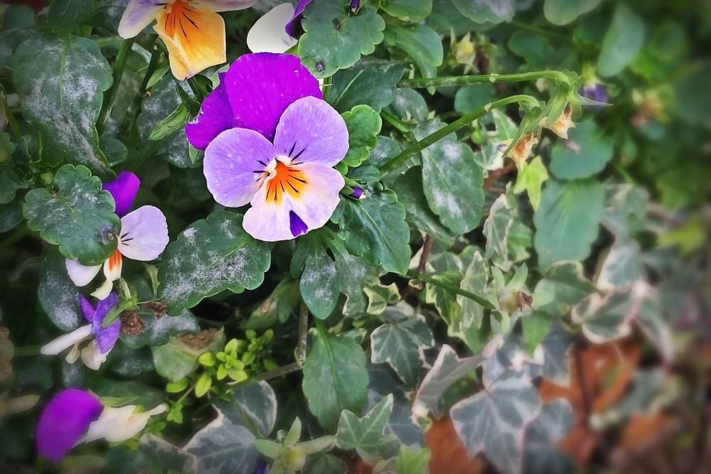 Social+Media+garden+in+bloom.jpeg