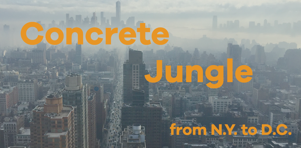 concrete-jungle-2.png