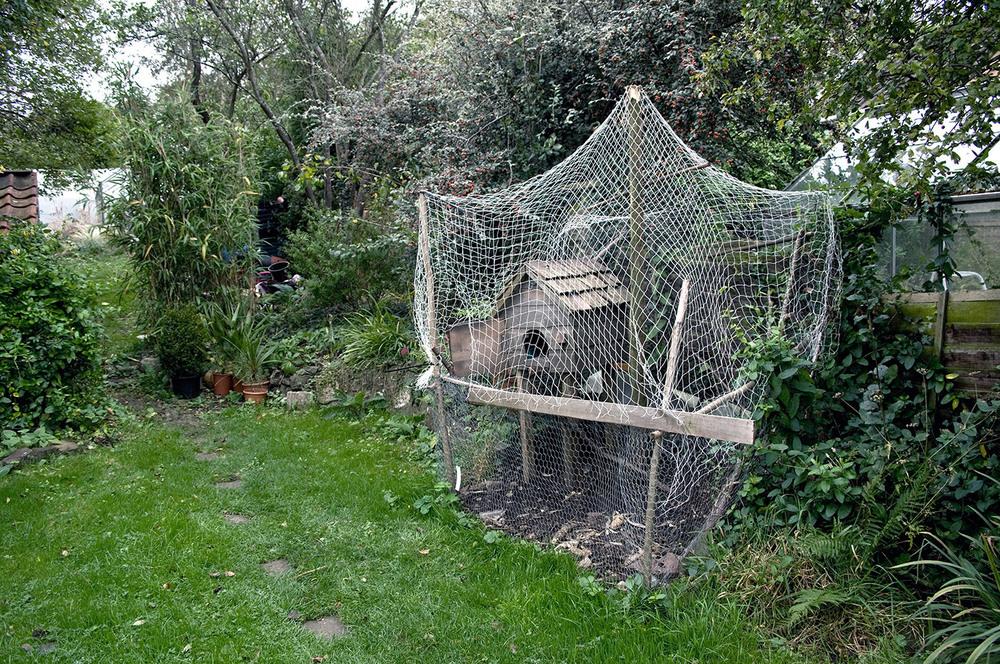 Chicken Coop I