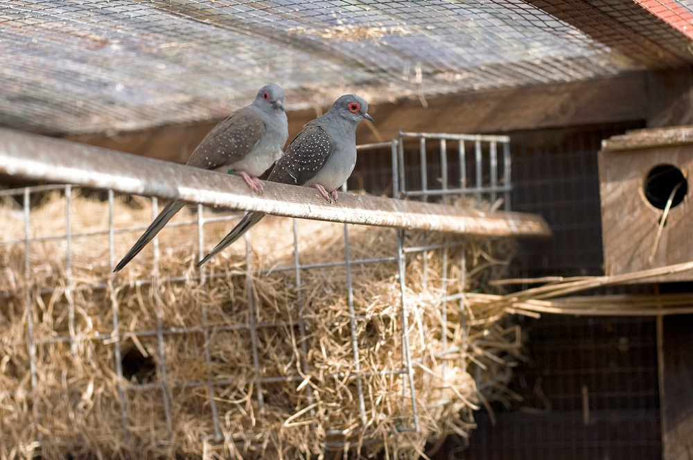 Henry's Birds