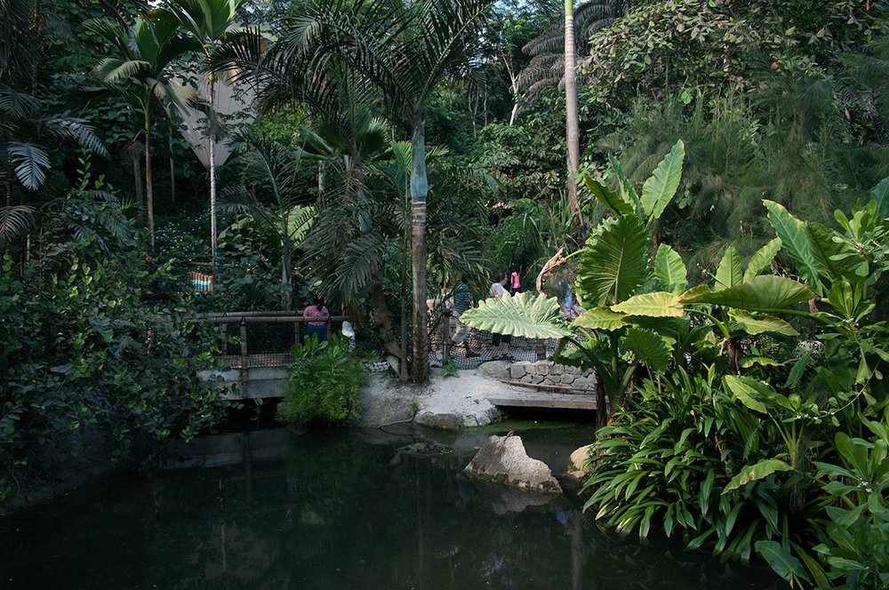 Pond in Eden Project, Cornwall, England